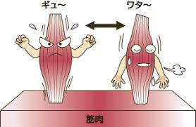 膝関節ブログ